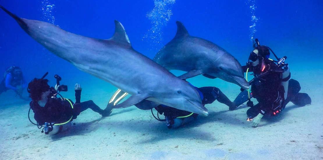 Golfinhos em Roatan