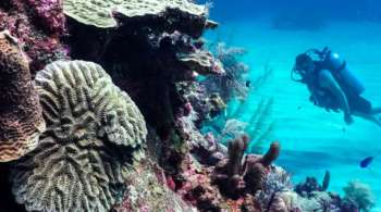 Underwater1-2-1500x609